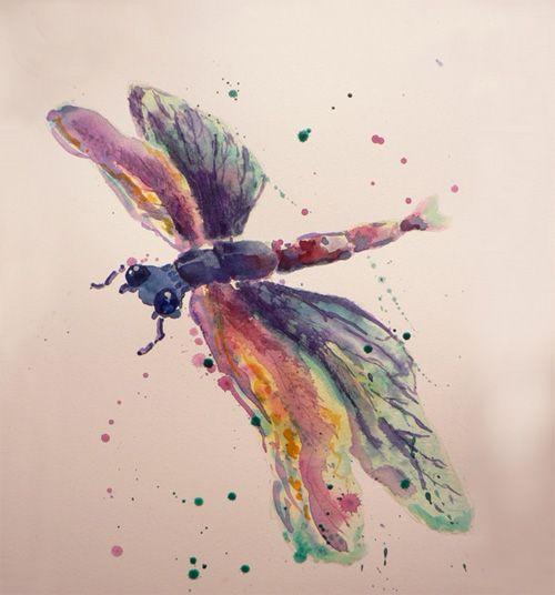 Pretty dragon fly