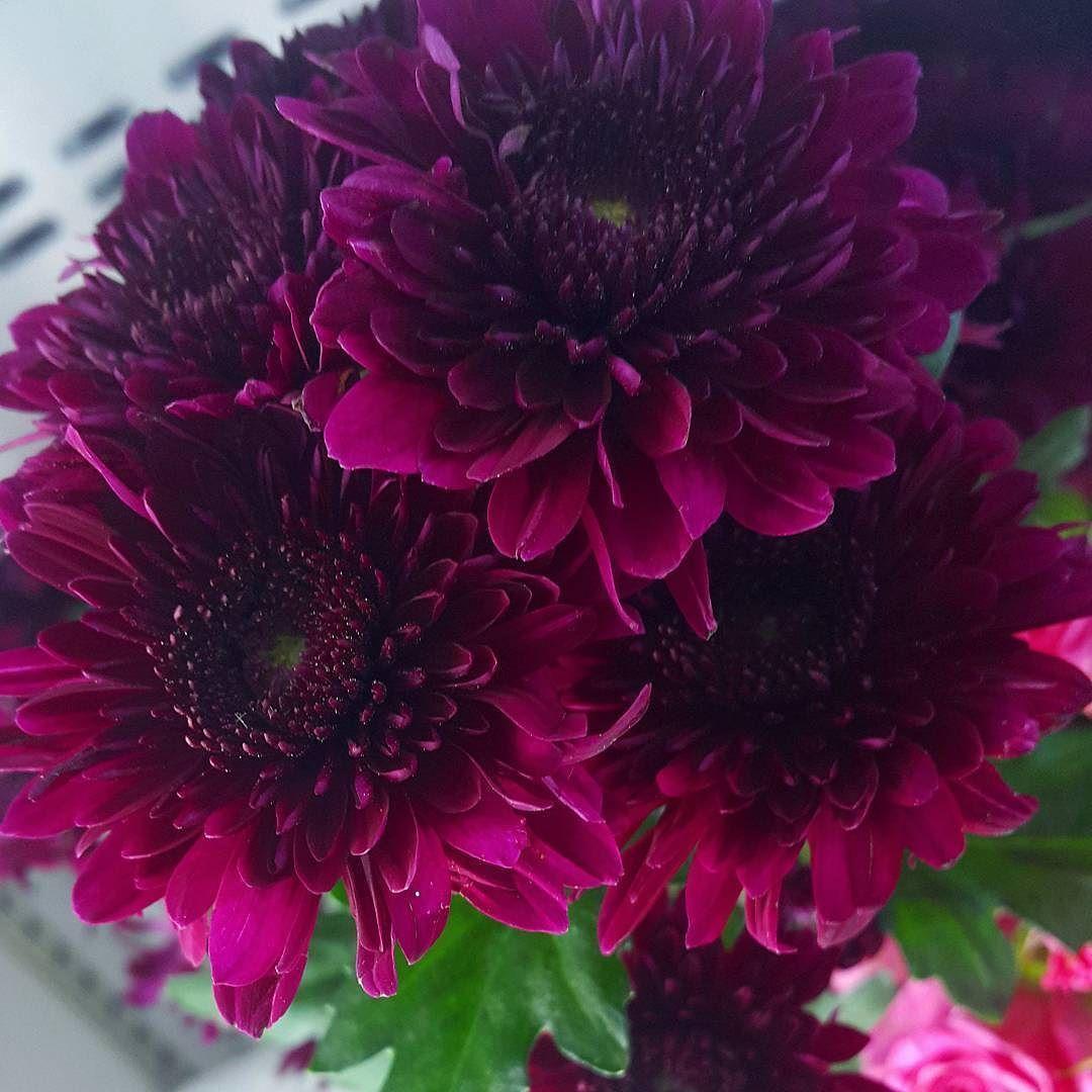 Breaker12111 On Instagram Morning Instadubai Abudhabi Myabudhabi Simplyabudhabi Flowers Instaabudhabi Flower Rose Goodmorning Instaflower Dxb Purple Plants