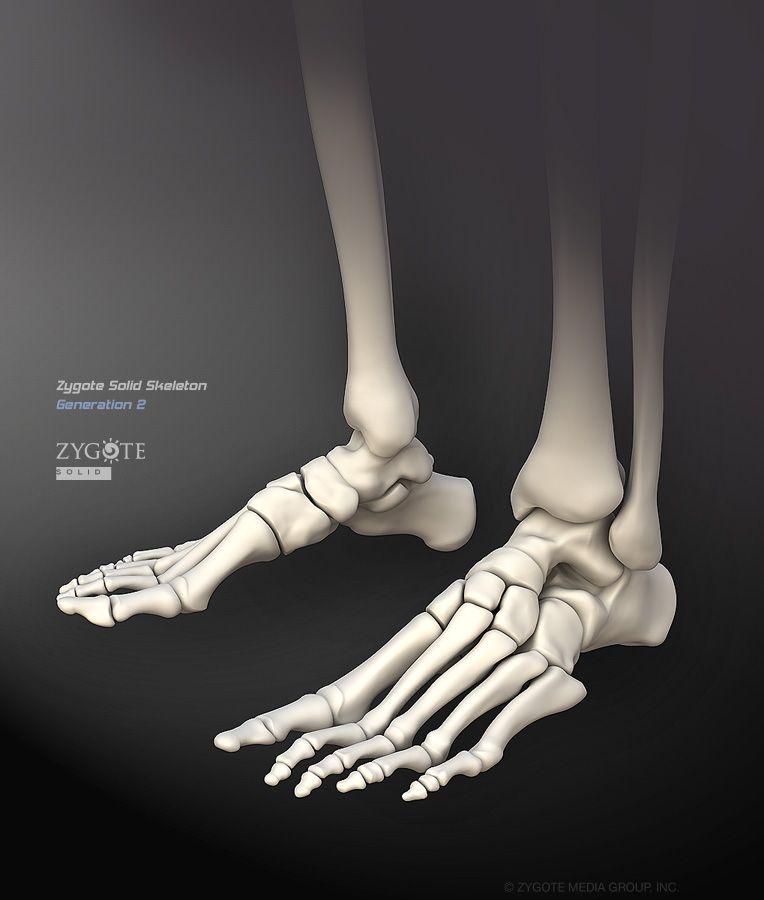 Solid 3D Skeleton Model | foot anatomy studies in 2019
