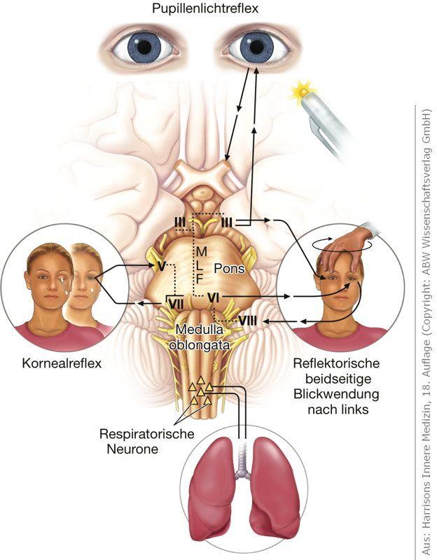 Harrisons Innere Medizin Online, 18. Auflage | Medizin | Pinterest ...