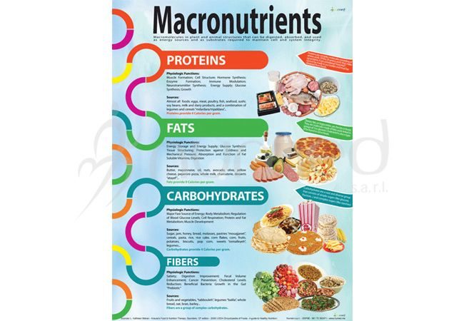 what are the three macronutrients