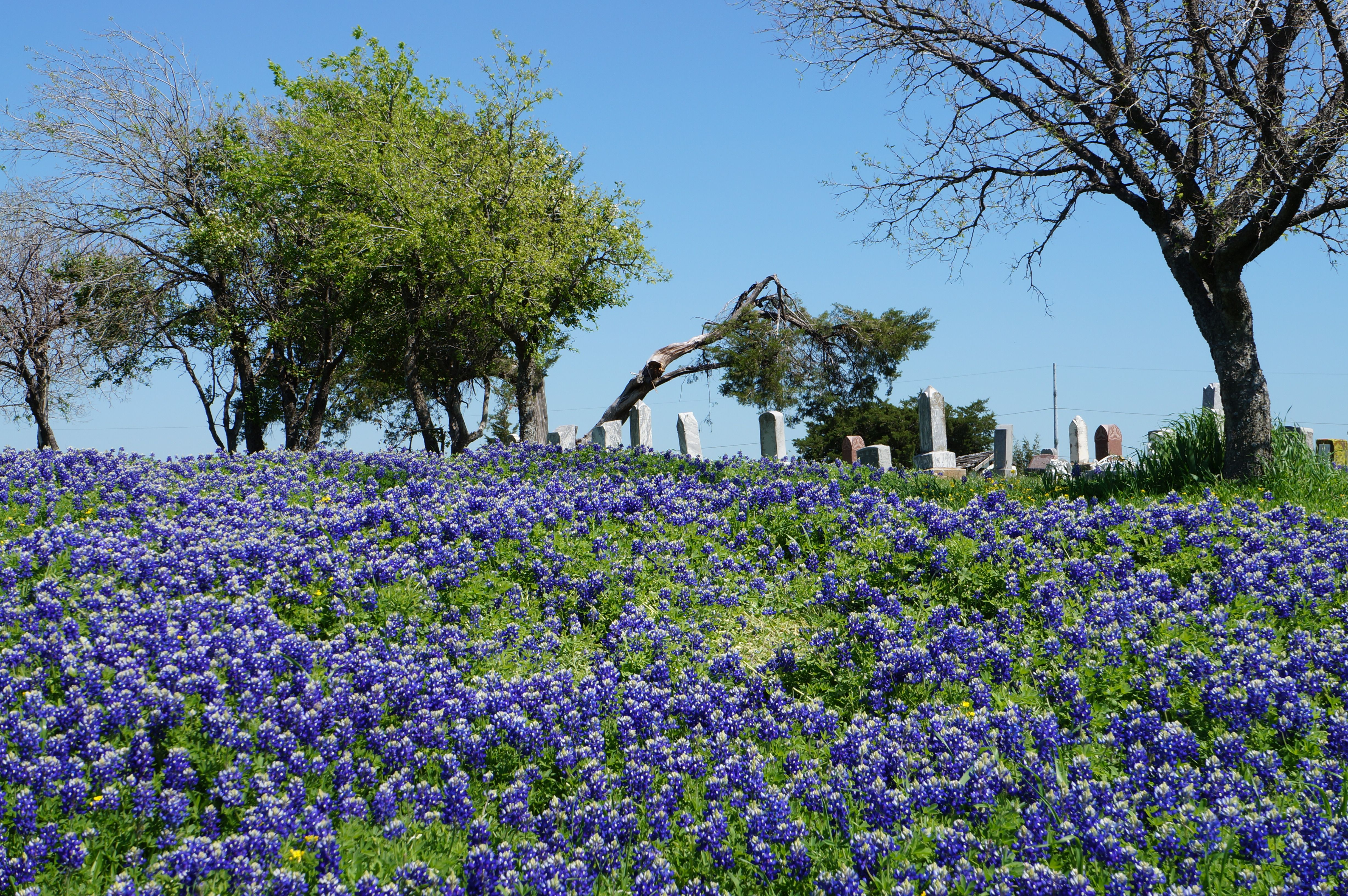 Zion Cemetery In Little Elm Tx I Took This Picture 3 25