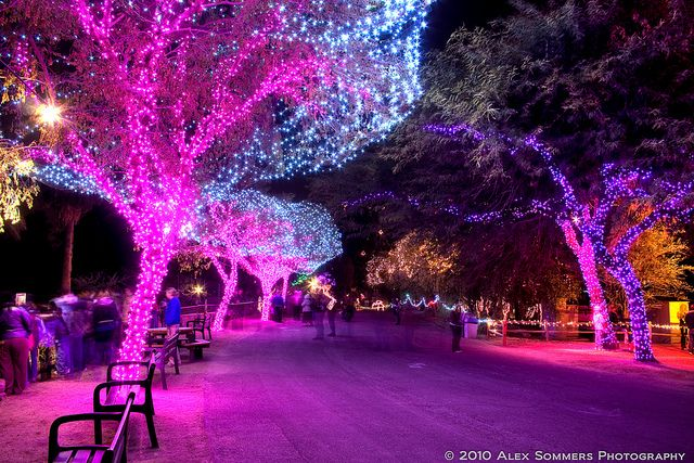 Phoenix Zoo Christmas Lights In Hdr Christmas Lights Lights Holiday Spirit