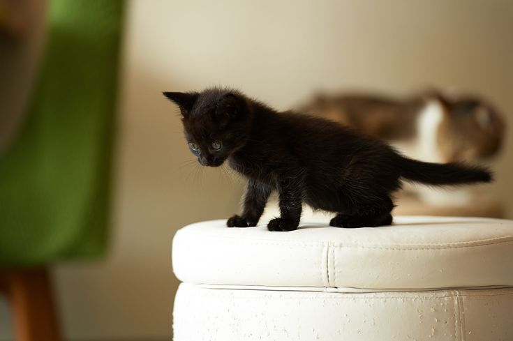 Here S What To Expect In The First 6 Weeks Of Your Kitten S Life Cat Sleeping Kittens Funny Cats