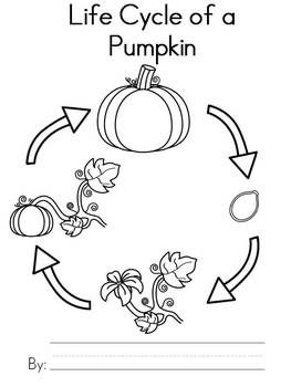 Use This 7 Page Pumpkin Life Cycle Booklet To Give Your Students An Opportunity Write Their Own Non Fiction Book Each Contains A Black And