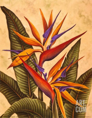 Tropical Bird of Paradise Art Print by Dianne Krumel at Art.
