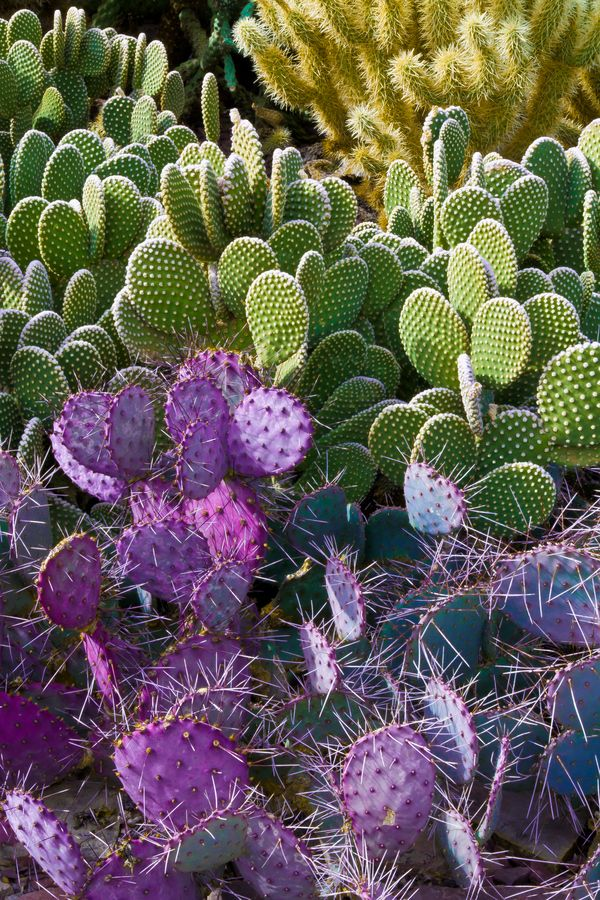 Cactus Garden At The Desert Botanical Gardens Phoenix Valerie Millett