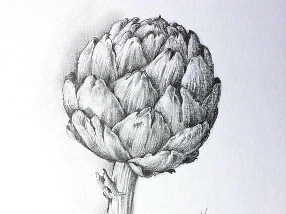 Artischocke Original Bleistift Zeichnung Bild Pencil Drawings In