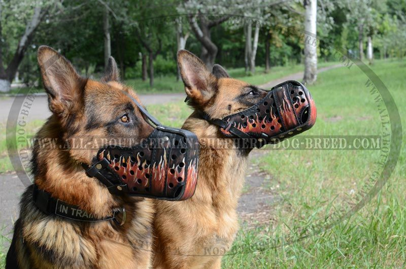 Burning Flames Dog Muzzle For Agitation Attack 79 00 Www All