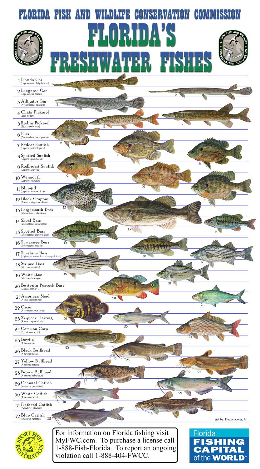 many species of fish are suitable for aquaculture and ForFlorida Freshwater Fish Species