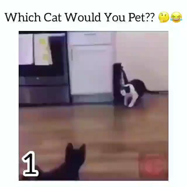 OMG Super Cat ?