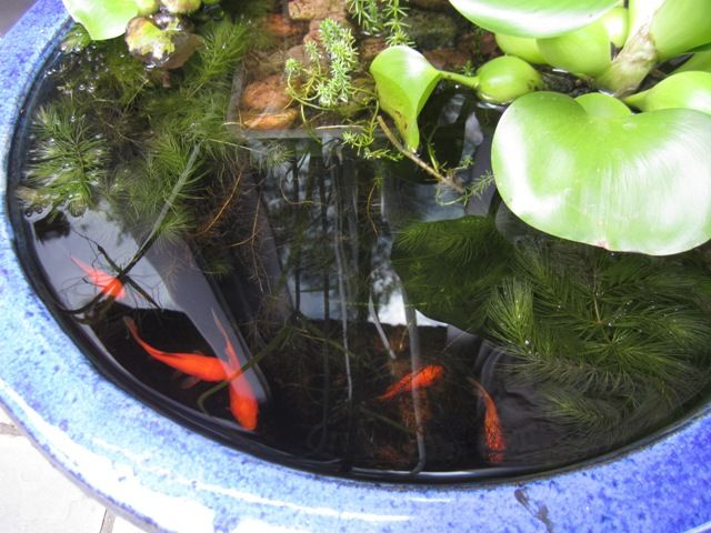 Mini pond in a pot at the judd 39 s ponds pinterest for Container ponds with fish