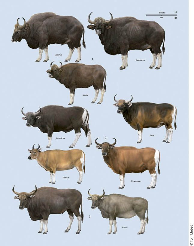 Toni Llobet Nature Illustrated Ca Handbook Of The Mammals Of