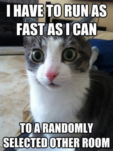 Cat Logic Funny Pictures Funny Cats Crazy Cats