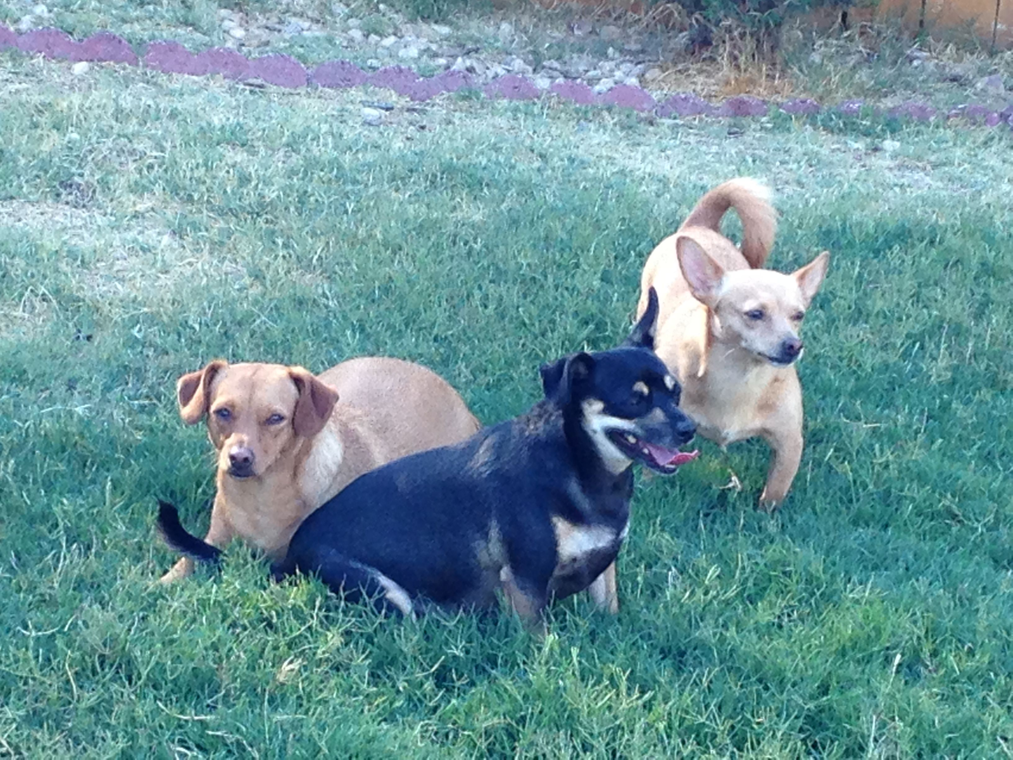 Liam, Mickee & Gus
