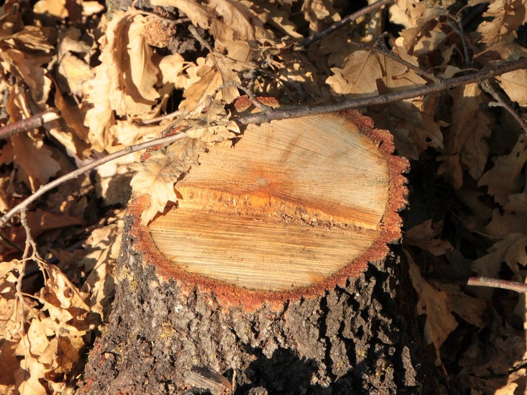 Pin on Redcliffe Tree Stump Grinding