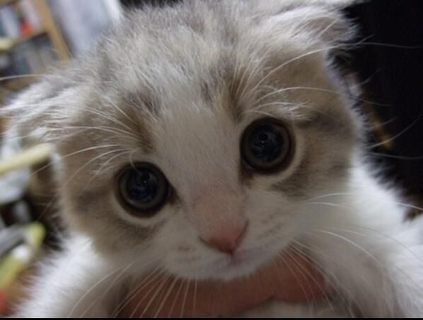 Hello Niedliche Tierbilder Susseste Haustiere Susse Katzen