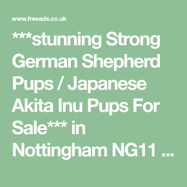 Stunning Strong German Shepherd Pups Japanese Akita Inu Pups For Sale In Nottingham Ng11 On Fre Puppies For Sale Japanese Akita German Shepherd Puppies