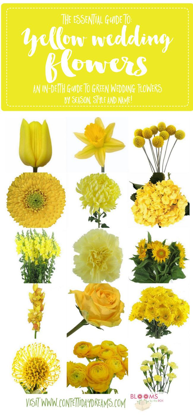 Names And Types Of Yellow Wedding Flowers With Pics Flower Tips