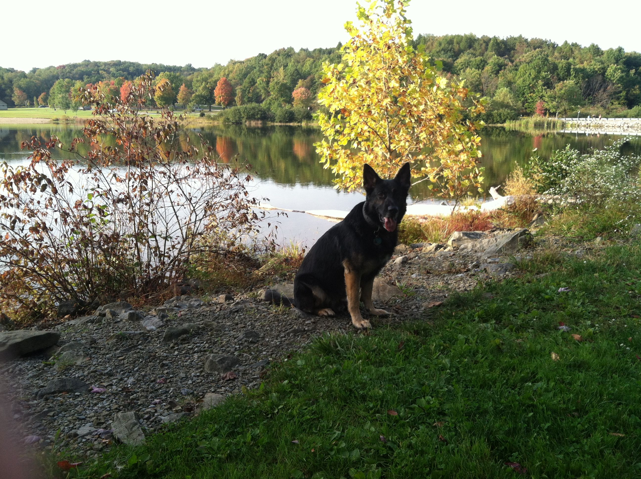 Greater Allegheny Passage Summer 2013 German Shepherd Dog Hiking