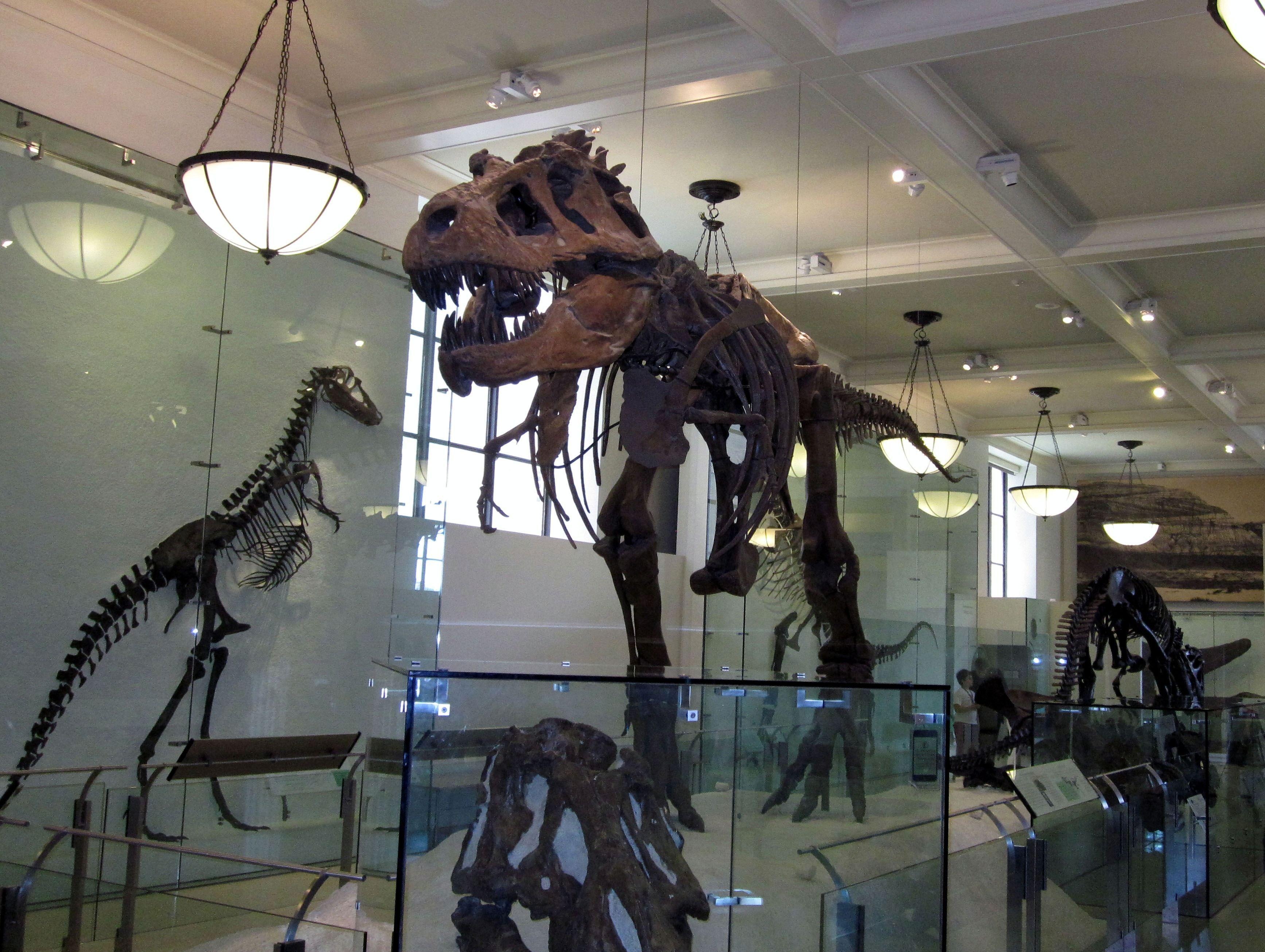 Resultado de imagen para natural history museum nyc