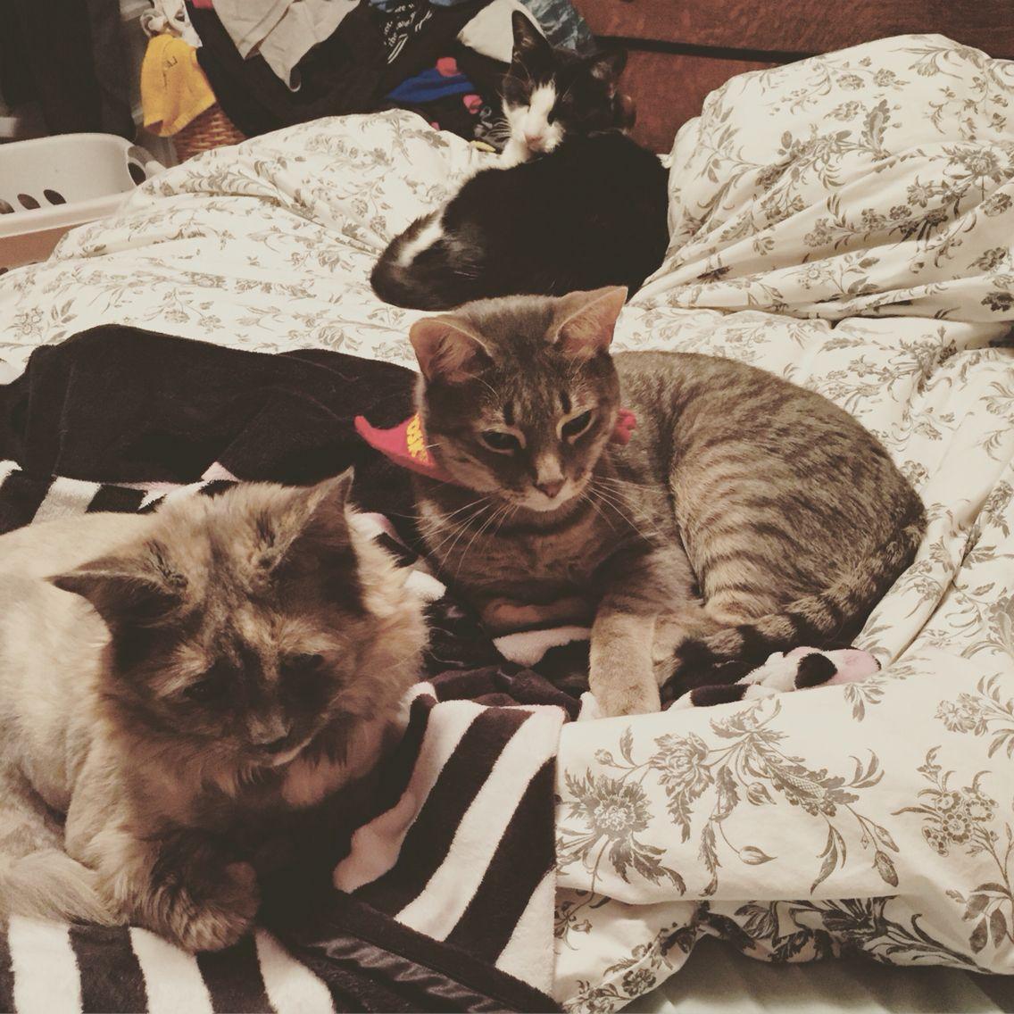 The #MTXcats