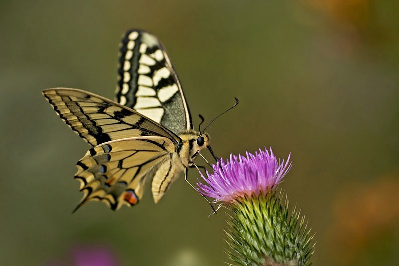 Image result for flying butterflies