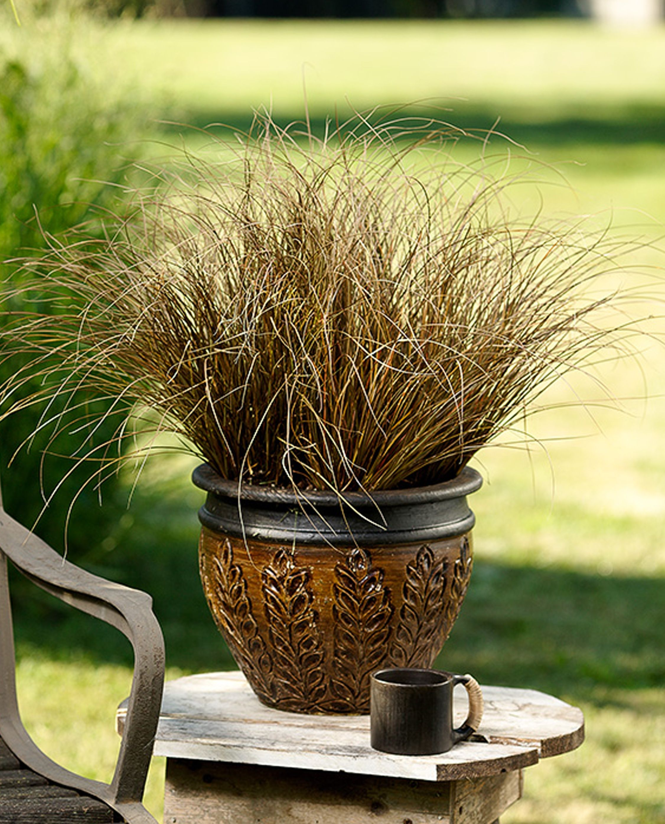 Graceful Grasses® Toffee Twist - Toffee Twist Sedge - Carex ...