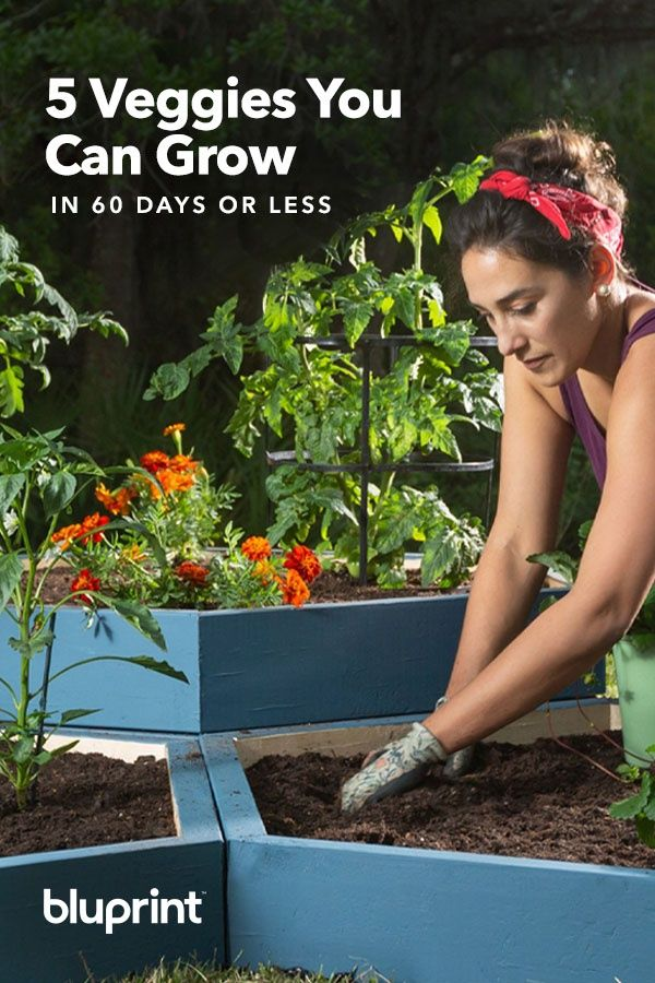 5 Vegetables You Can Grow In 60 Days Or Less Fast 400 x 300