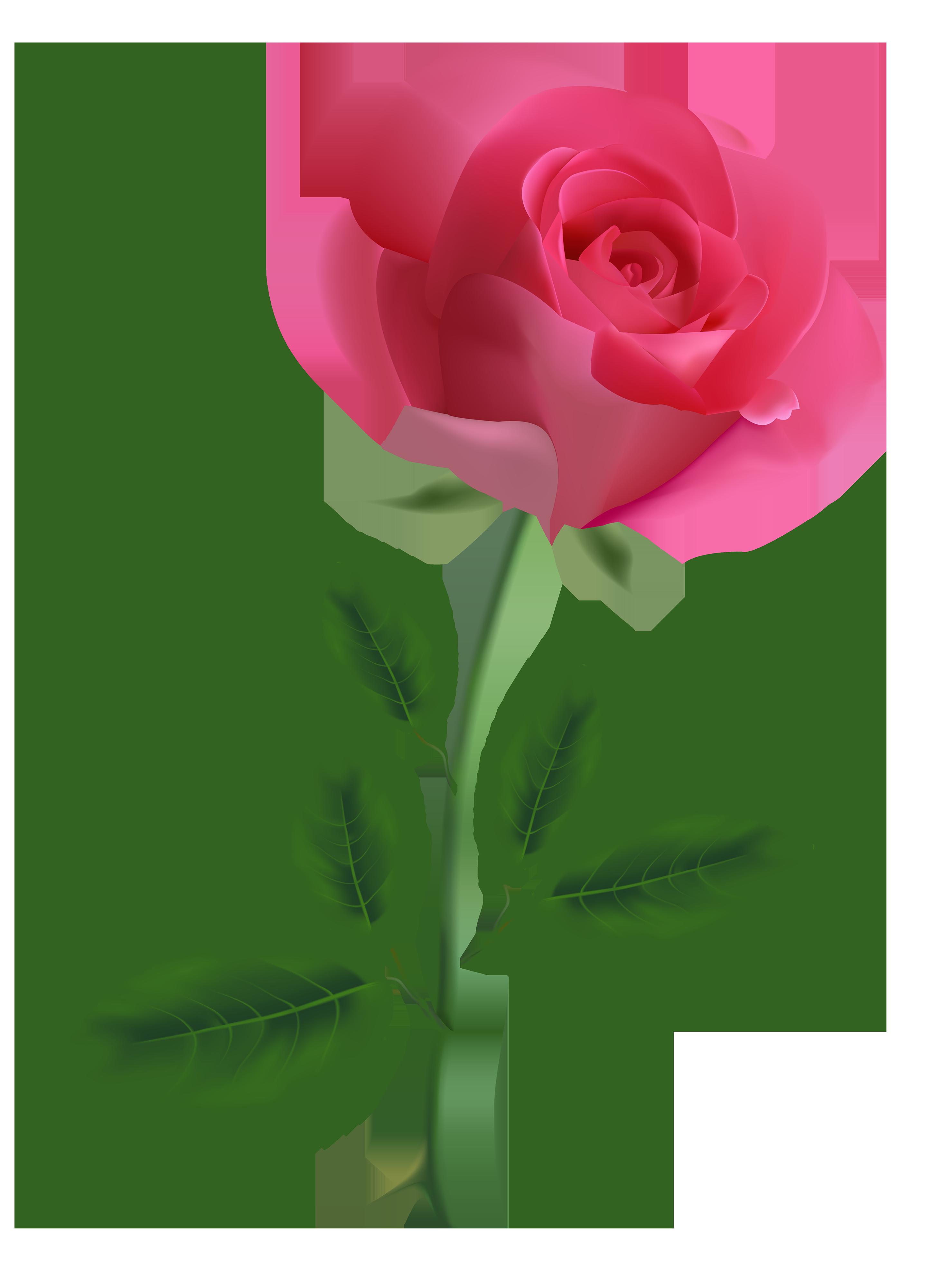 Pink Rose Clipart PNG Image Rose flower png, Flower