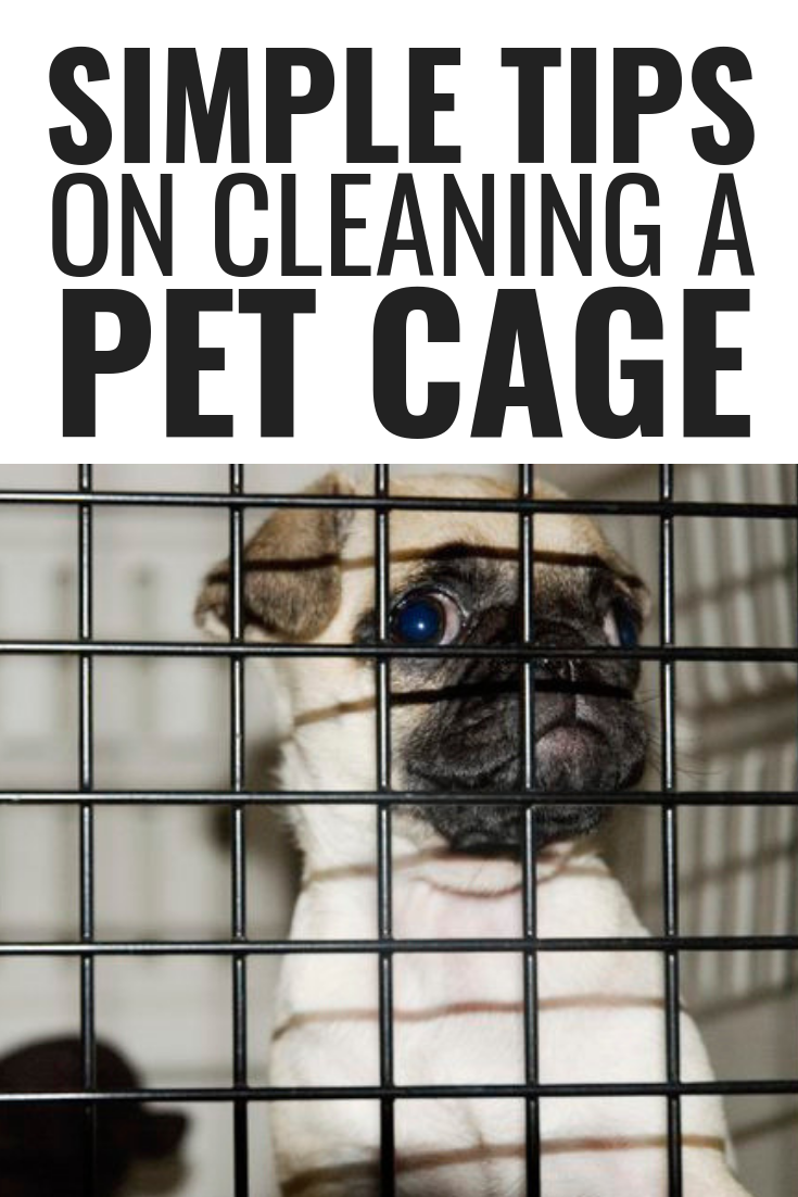 Simple tips on cleaning a pet cage how to clean cleaning tips