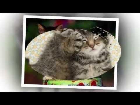 Забавные котята и щенята