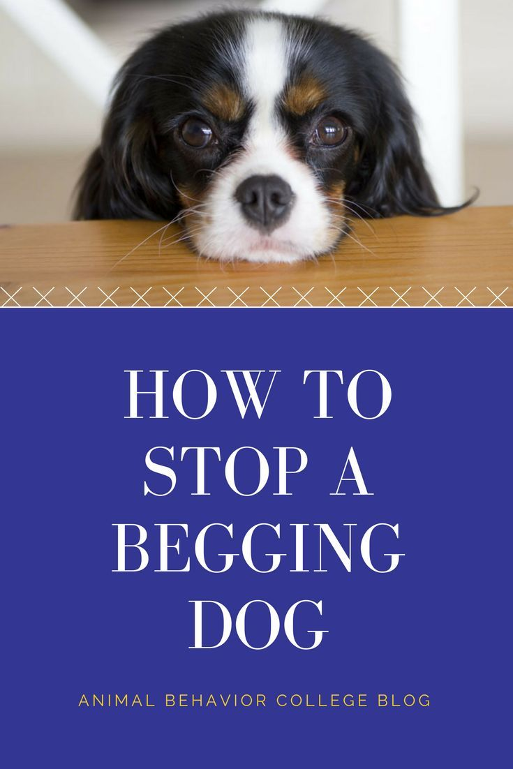How to stop a begging dog aggressive dog animal