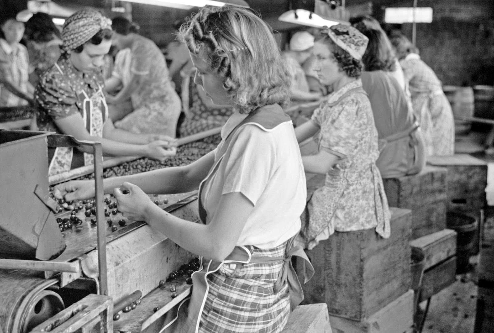 Migrant girls working in cherry canning plant, Berrien