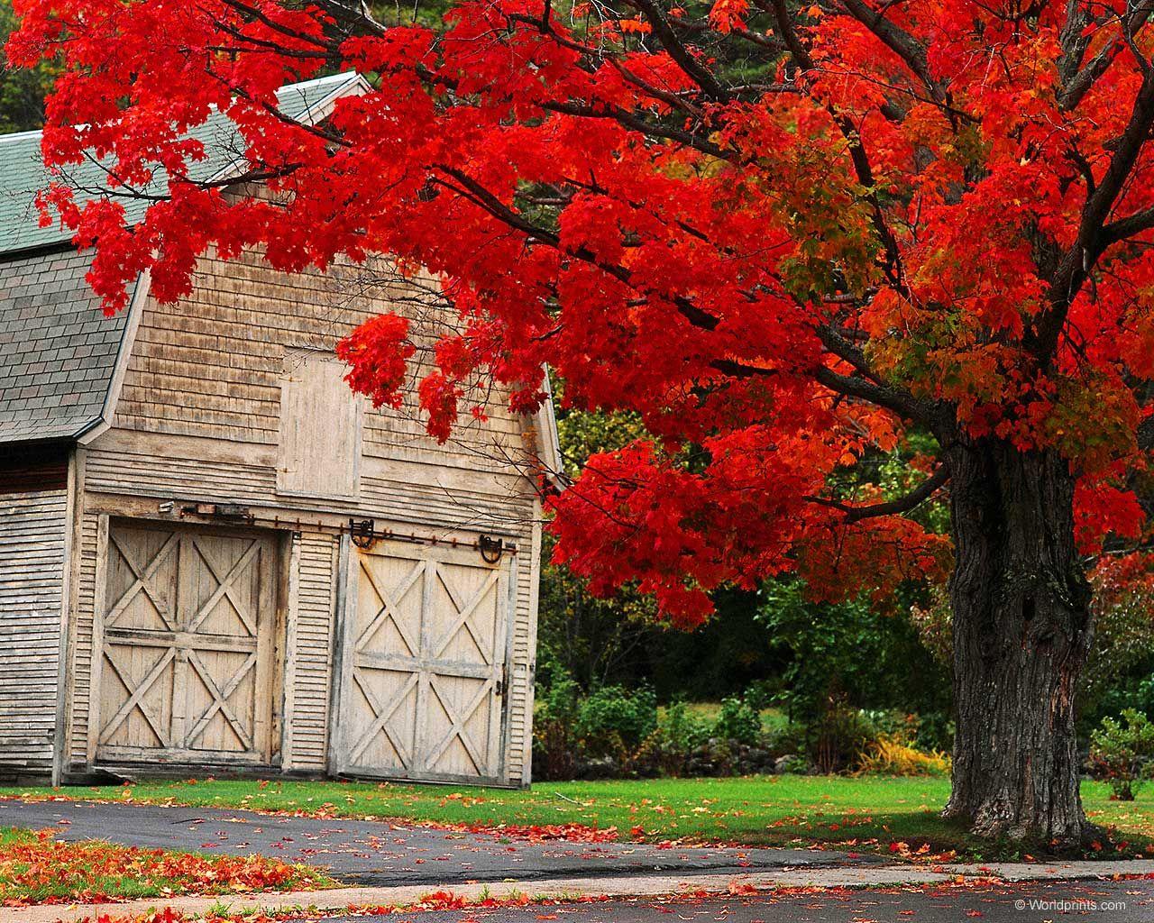 http// Autumn Photos autumn ny Autumn Photography