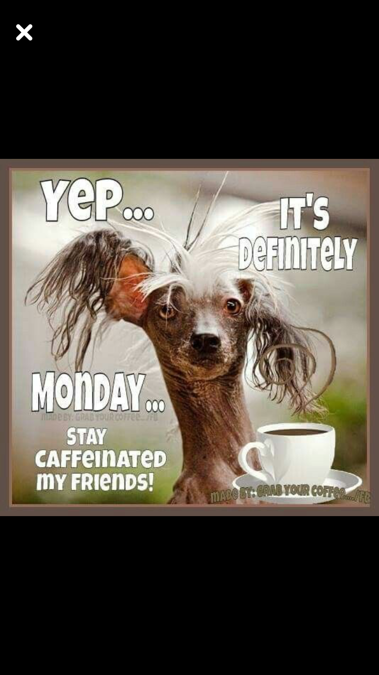 Monday Coffee | Need Coffee Pics/Quotes/Signs in 2019 | Funny ... #needCoffee