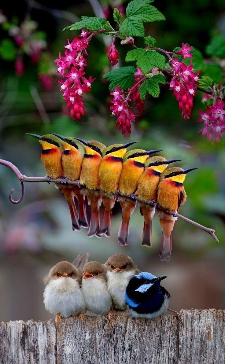 pin von ꧁ઽυɳઽнιɳҽ꧂ auf animals  niedliche vögel vögel