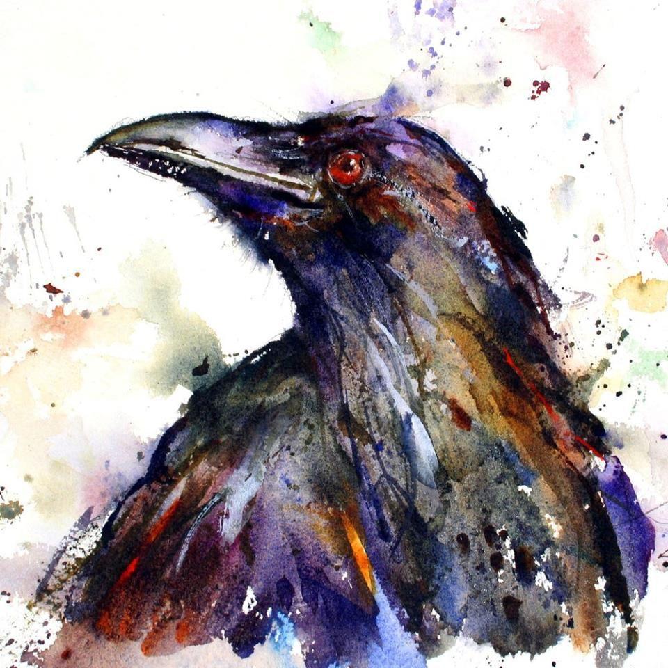 Raven ll 10 x7 original watercolor