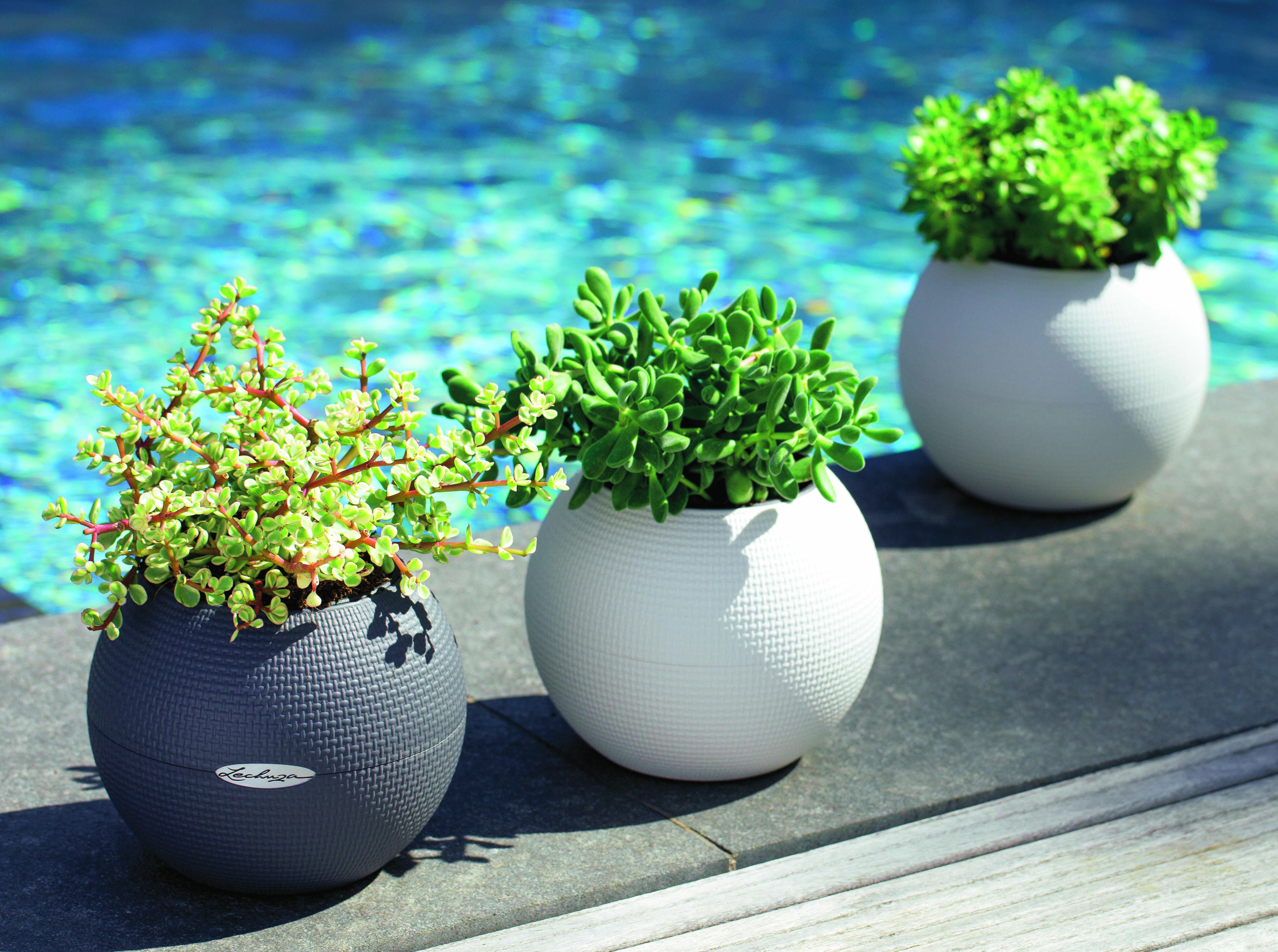 pin lechusa features husky this large planter from us a lechuza