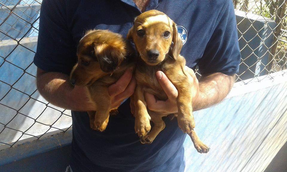 Gauteng Nigel Spca Still Three Cutie Patootie Pups Waiting For