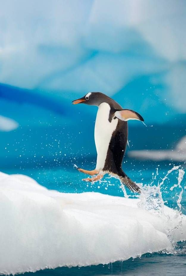 Emperor Penguins! Check out these 5 Tips For Travel to