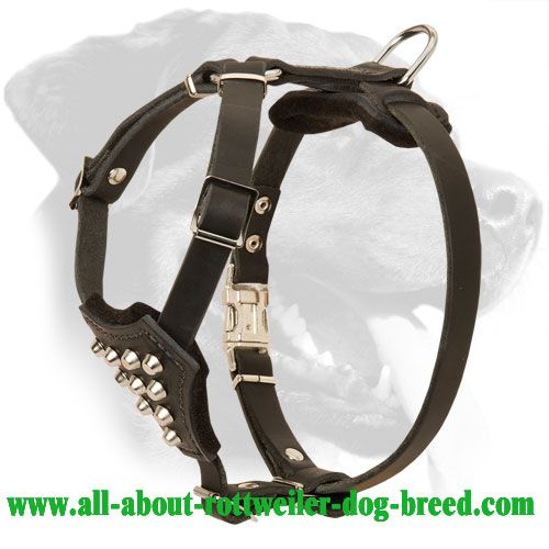 Felt Padded #Leather #Rottweiler #Puppy #Harness with Studs $59.90 | www.all-about-rottweiler-dog-breed.com