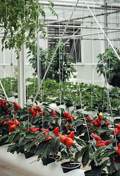 Dwarf Peppers | The Land At Epcot Center, Disney World, Orlando, Florida,.  Hydroponic ...