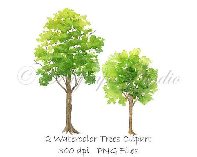 Watercolor Hand Painted Oak Trees Clipart Nature Forest Art