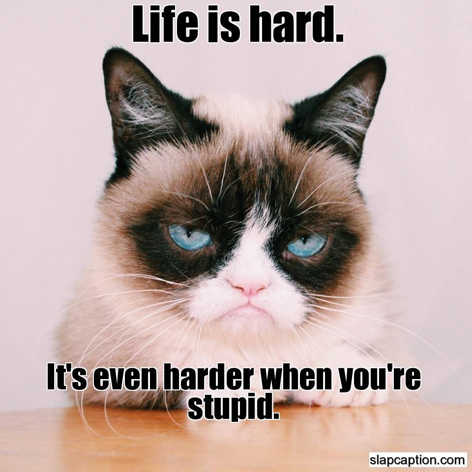 Slapcaption Com Grumpy Cat Humor Funny Grumpy Cat Memes Grumpy Cat