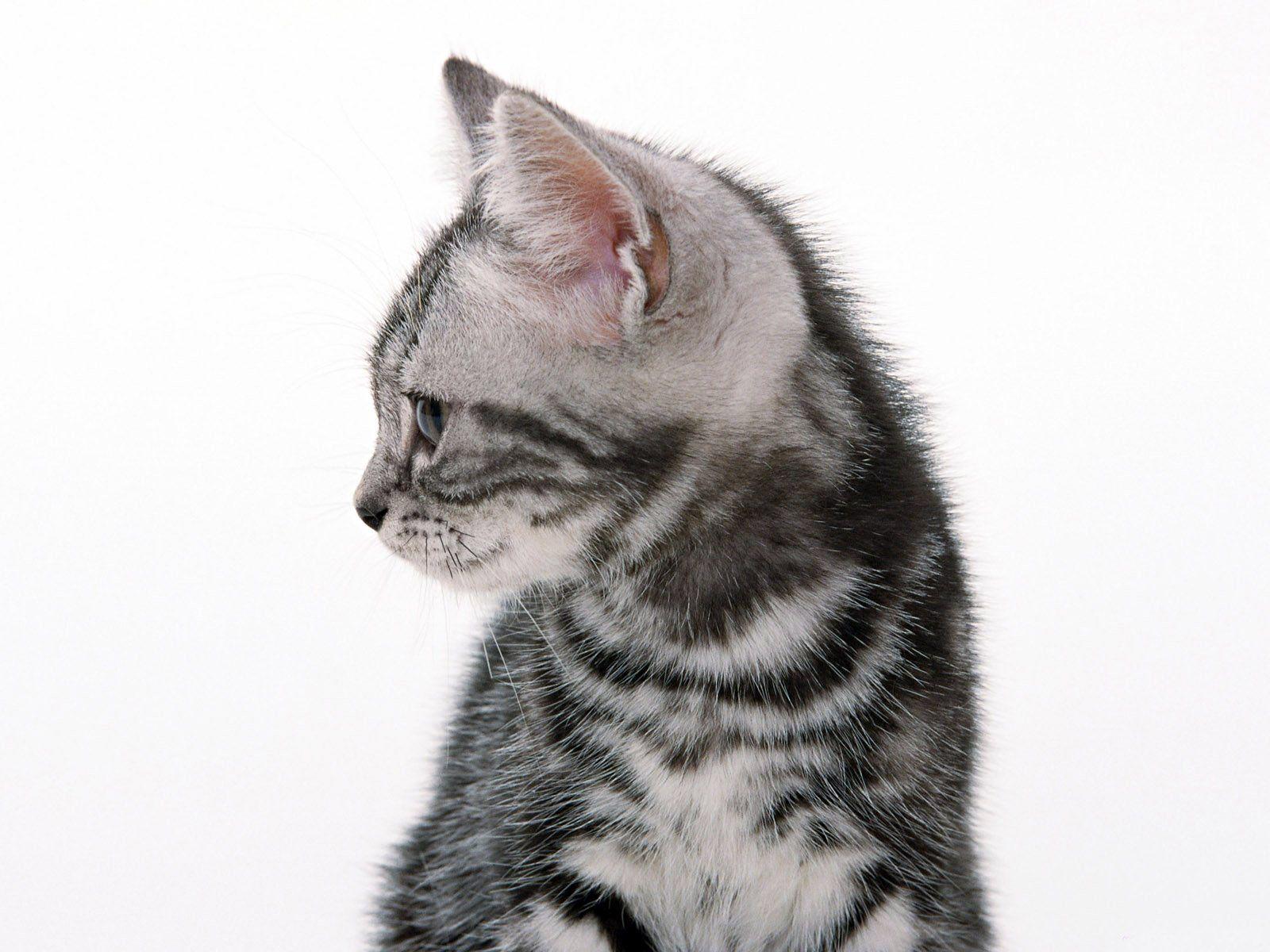 хорошего коньяка картинка котенок смотрит вправо если это