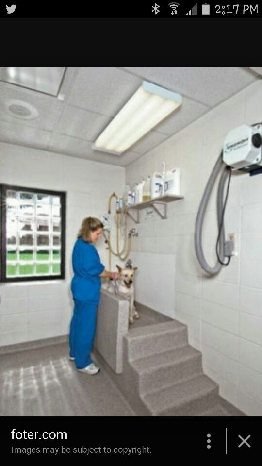 Work station (With images) Dog rooms, Pet grooming tub