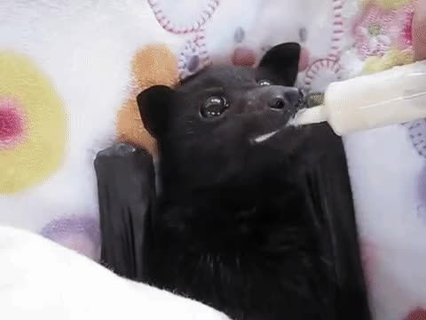 Who said bats aren't cute?