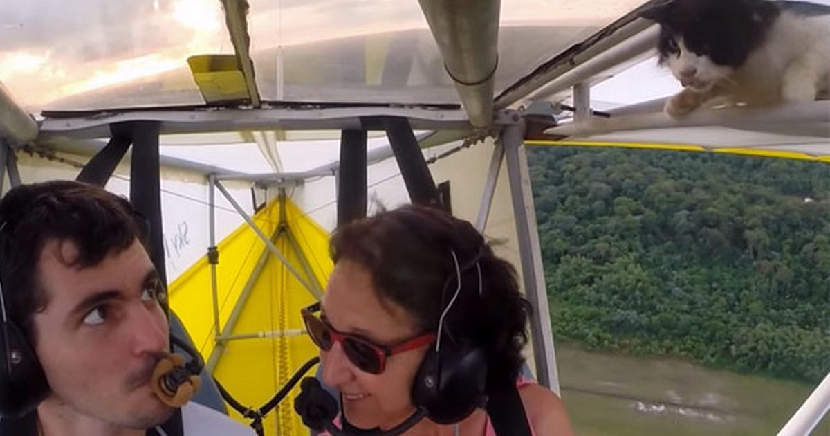 The stowaway moggy gave rookie pilot Romain Jantot the fright of his life as it emerged on top of the wing of an Ultralight plane and sticking its head into the cockpit, The cat was heard muttering that he was never going to use RYAN AIR again