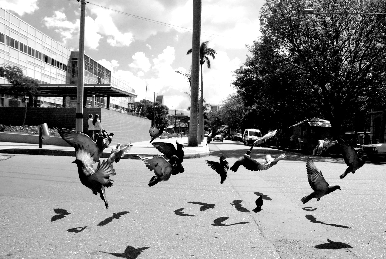 Palomas alzando vuelo | By Esteban Morales. © 2012